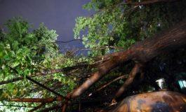 Furtuna a facut ravagii in Arges - Copaci căzuți și străzi inundate
