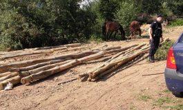 Tânăr din Domneşti prins cu lemne fără acte - I-AU FOST CONFISCATI 75 MC MATERIAL LEMNOS