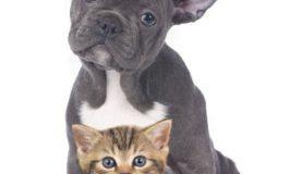 6 beneficii ale animalelor de companie pentru sănătate
