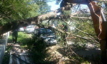 VIDEO!  Copac cazut peste o masina la Merisani - A rupt si firele electrice