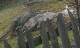 ACUM ! OAMENI FARA SUFLET ! Un cal este lasat sa moara la marginea orasului dupa ce a fost batut