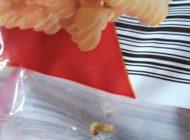 Pentru biscuitii cu viermi - KAUFLAND a luat masuri !