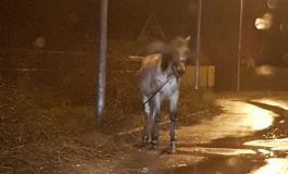 ALO! Protectia aimalelor - De 3 zile un cal chinuit îngheață legat de un stâlp