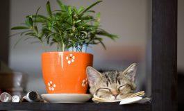 Vampiri energetici. Plante de apartament si animale de care sa te feresti. Ce plante si animale sunt benefice in casa