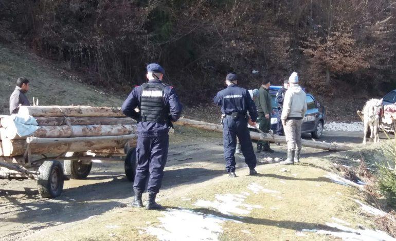 VIDEO! Hoții de lemne prinși în flagrant de jandarmi