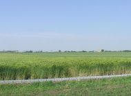 STIATI CA ? România, țara cu cel mai ieftin teren arabil din UE