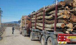 Prinsi în timp ce transportau cu camioanul lemne fără documente legale