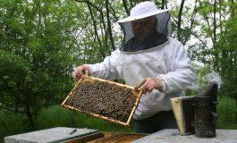 Ce trebuie sa stii daca vrei sa cresti albine