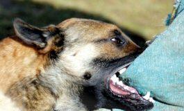 SCANDALOS ! Batrana muşcată de caini, refuzată la spital ! Reactia primarului Panţurescu: JALNICA! A INCHIS TELEFONUL