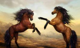 Ce inseamna cand visezi cai. Semnificatii in functie de culoare si alte aspecte