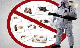 La Mioveni, primăria incepe acţiunea de deratizare, dezinsecţie si dezinfecţie - 6 zile pentru igiena orasului