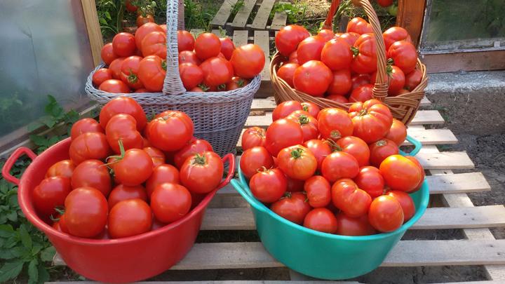ATENŢIE ! Se fac plățile pentru programul de tomate