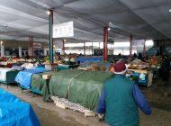 Hala pieței centrale din Câmpulung va fi demolată - 1 milion de euro pentru una nouă
