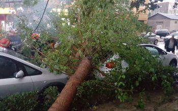 ACUM in Argeş ! Vijelia a trantit un copac peste 2 mașini
