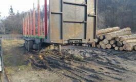 Firmă din Sălătrucu prinsă cu lemne fără acte de Poliţie şi Garda Forestieră