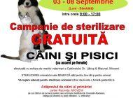 Campanie de sterilizare gratuita a cainilor si pisicilor la Mioveni