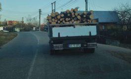 Maşinile lui Nastea cară lemne la ceas de seara ! Politia nu se bagă !
