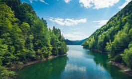 DE MAXIM INTERES! Azi s-a lansat GARDIENII PĂDURII, aplicația prin care poți salva pădurile de tăieri ilegale