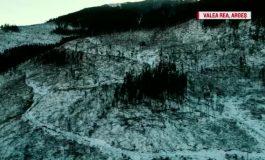 """VIDEO ! Mafia şi Jaful pădurilor """"FABRICAT IN ARGEŞ"""", în atenţia întregii ţări !"""