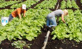 Firmele și PFA-urile vor primi bani ca să angajeze tineri în agricultură și în industria alimentară