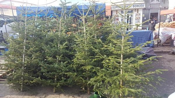 Cât costă brazii de Crăciun în Piața Centrală din Curtea de Argeș