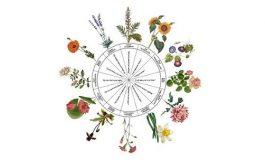 Horoscopul floral. Care este planta zodiei tale și ce spune despre tine