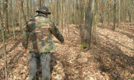 INCREDIBIL ! Pădurari din Argeş dați afară pentru că sesizează furturile din păduri