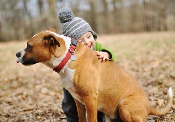 Animale de companie. Top cele mai potrivite animale de companie pentru copii