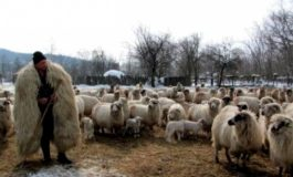 330 argeşeni cu 90.449 s-au înscris în programul de susținere a crescătorilor de ovine 2019