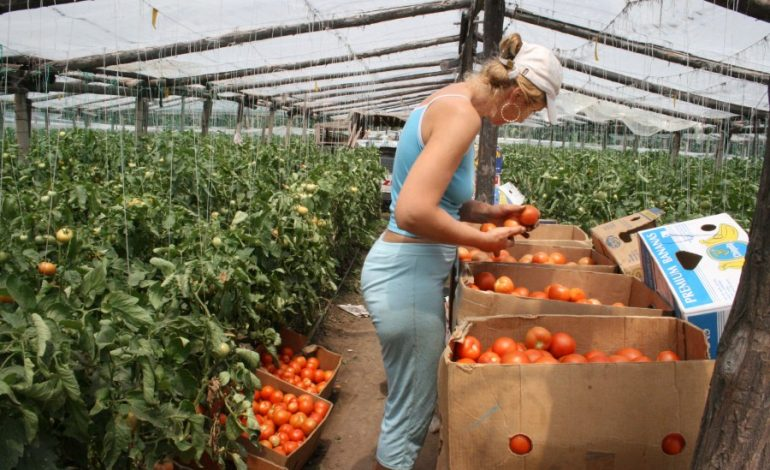 Producătorii argeșeni de legume, aşteptaţi la întâlnirea cu specialiștii DAJ Argeș și I.C.D.L.F-Vidra