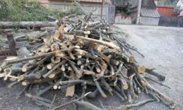 Captură record a poliţiştilor si a Garzii Forestiere: 5 metri cubi de lemne !