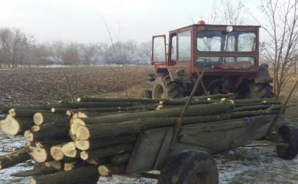 Bărbaţi din Albeşti prinşi transportând ilegal lemne cu un tractor şi trei autoutilitare