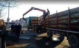 VIDEO! La Arefu, autocamion plin cu lemne fara documente - Jandarmii au confiscat