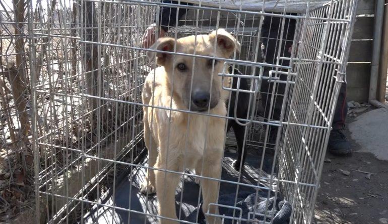 Abandonaţi de argeşeni, sute de câini din Argeş pleacă în Germania !