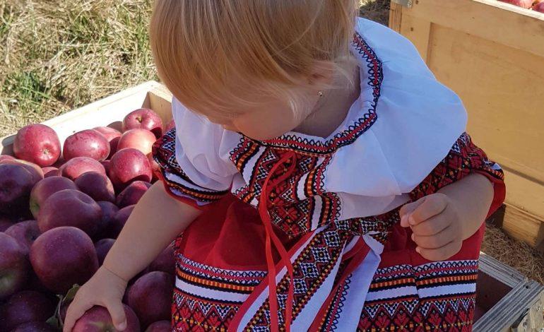 De mâine, toţi preșcolarii și elevii din Argeș vor primi mere ! Fructele provin de la Mărăcineni