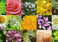 Ce floare îți poartă noroc primăvara aceasta, în funcție de zodie