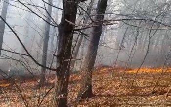 ALERTA ! VIDEO Incendiu de proporţii la Mălureni - Focul a ajuns în pădure !