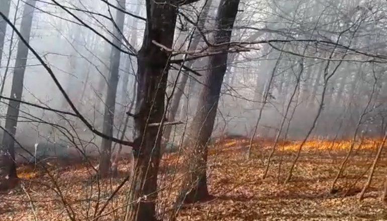 ALERTA ! VIDEO Incendiu de proporţii la Mălureni – Focul a ajuns în pădure !