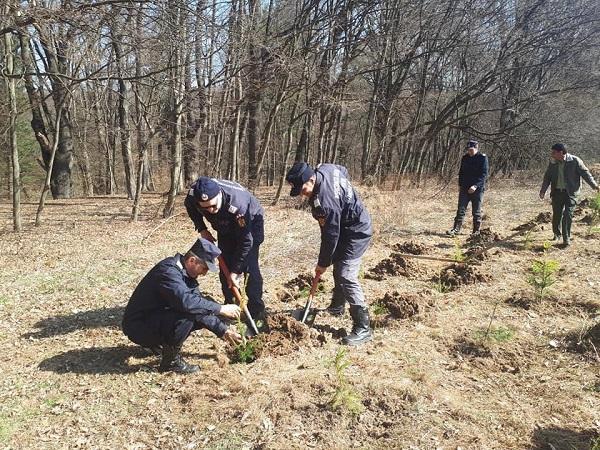 """Echipele de la ISU Argeș plantează pomi în Pădurea ,,Trivale"""""""