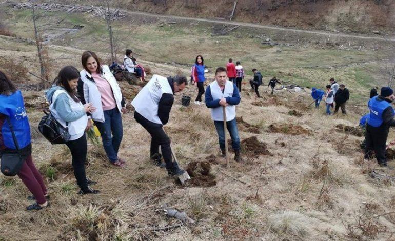 ASTA DA POLITICĂ ! Tinerii din ALDE Argeș au plantat puieți de brad în zona Valea lui Stan