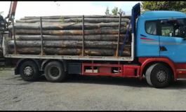 Prins cu camionul plin cu lemne dar fără documente | 5.000 lei amendă