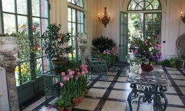 8 plante de apartament benefice pentru fiecare camera