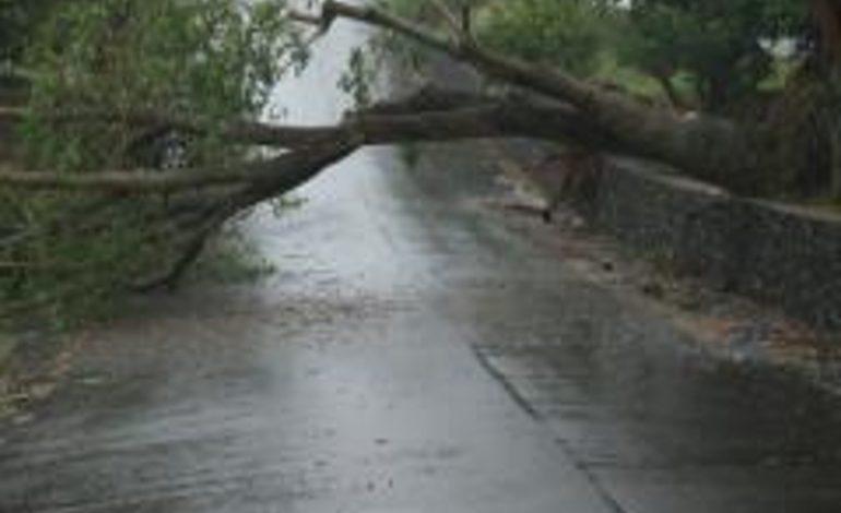 ACUM ! Copaci doborati de furtuna – La Malureni drumul este blocat