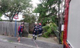 ACUM! O furtuna scurtă a facut pagube la Curtea de Argeș - Copac căzut pe casa