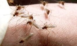 DSP Argeş avertizează: Atenţie la virusul West Nile! E TRANSMIS DE ŢÂNŢARI