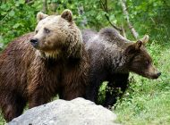 """Primar argeşean: """"M-a sunat Jandarmeria să alung ursul cu nuiaua!"""""""