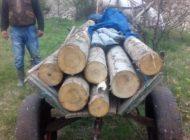 5 argeșeni prinși cu lemne furate