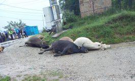 ACUM, IMAGINI SOCANTE IN ARGEȘ! 5 vaci moarte in drum electrocutate după o scurgere masiva de curent POLIȚIA ÎN ALERTĂ
