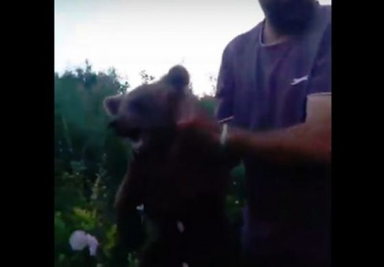 Video revoltător! Un pui de urs, chinuit de un grup de localnici din Brașov