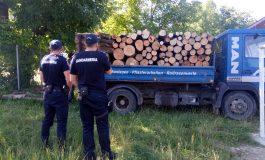 VIDEO ACUM! Hoți de lemne din Argeș prinși în flagrant